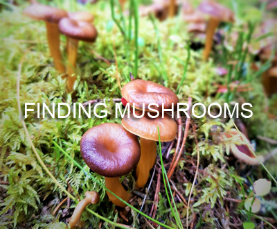Finding Mushrooms