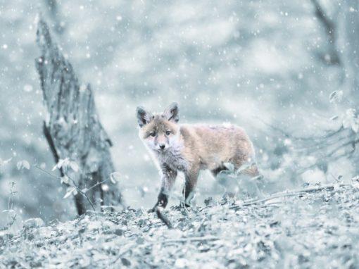 wilderness tur på vintern